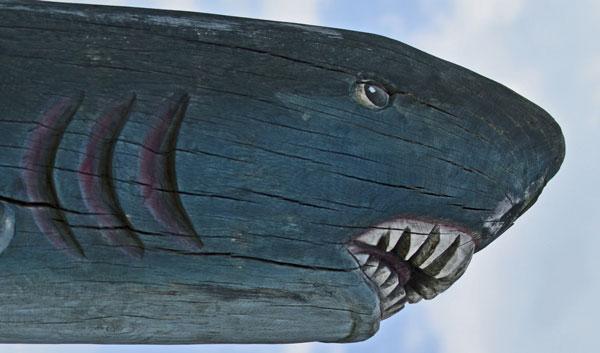 Un tiburón que nace sin competencia