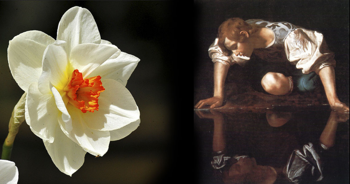 El mito del narciso