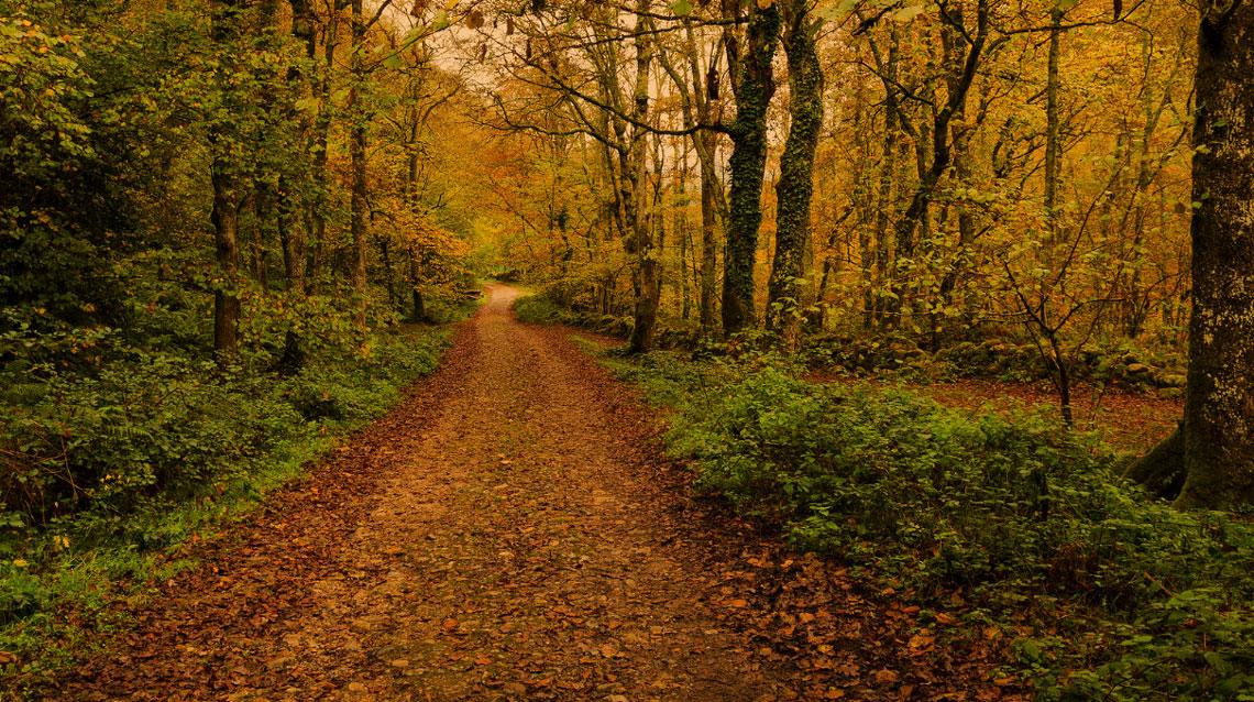 La decisión del Camino