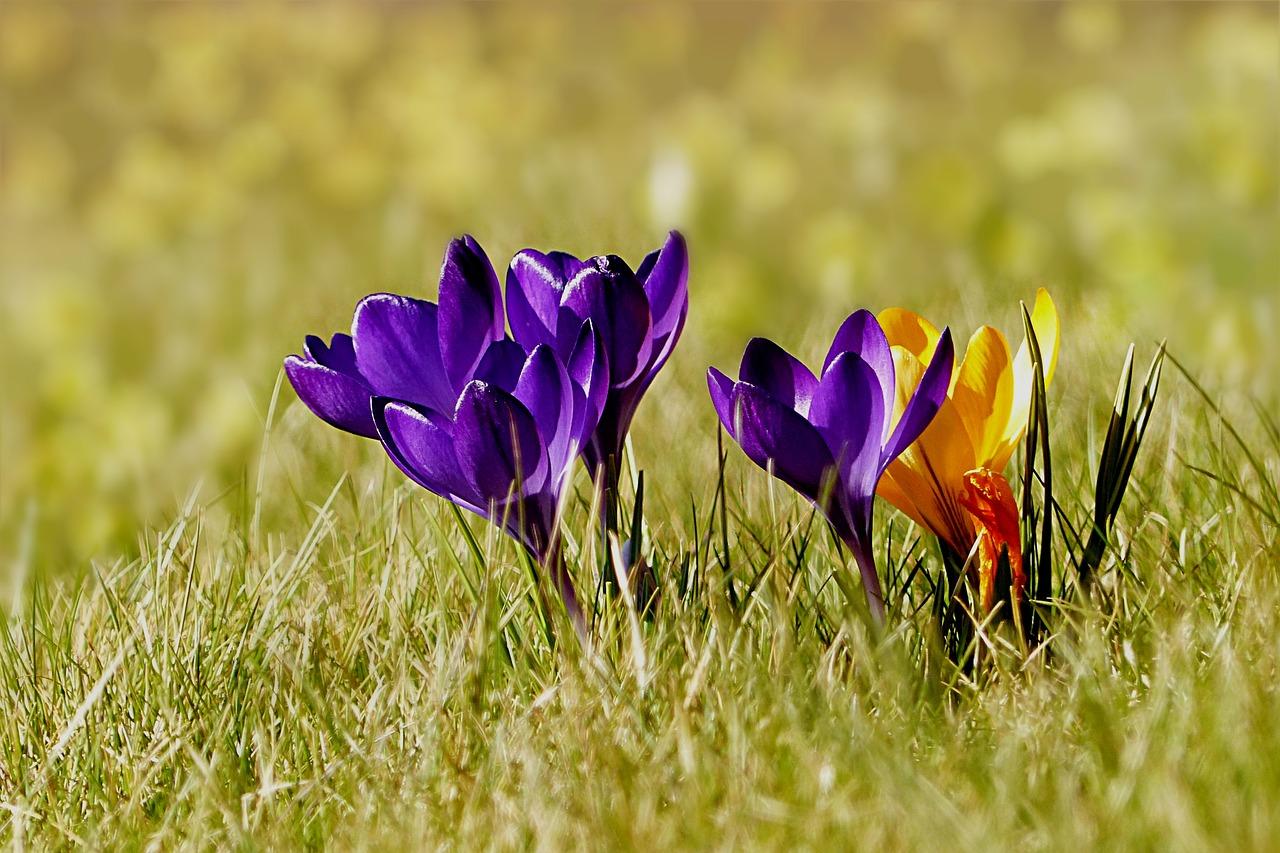 La primavera el blog altera